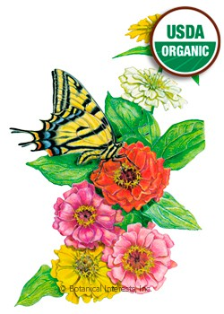 Zinnia Thumbelina Organic HEIRLOOM Seeds