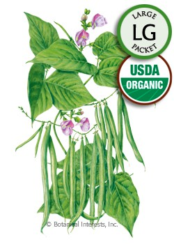 Bean Bush Provider Organic Seeds (LG)