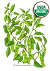 Pepper Chili Shishito Organic HEIRLOOM Seeds