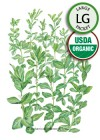 Cover Crop Fava Bean Sweet Lorane Improved Organic Seeds (LG)