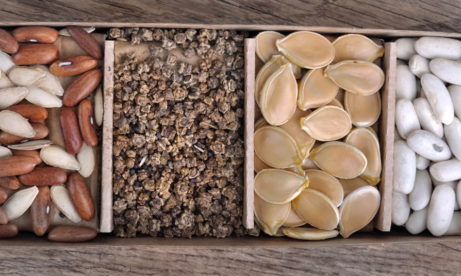 10 Tips for Beginning Seed Gardeners
